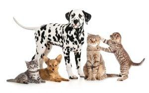 Ţânţari, căpuşe, pisici, câini