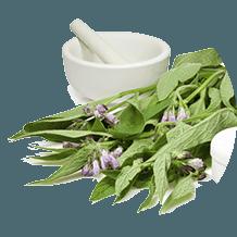 extractul de frunze de tătăneasă medicinală