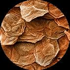 Înmoaie scuamele pielii excitate și contribuie la îndepărtarea lor rapidă