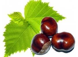 Extract-de-frunze-de-mesteacan-si-castan