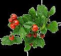 Extract de fructe de păducel